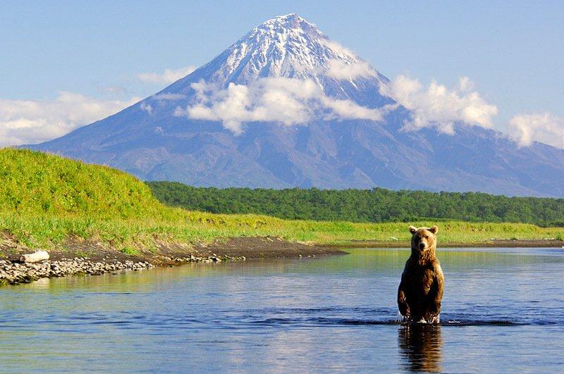 Foto dei possenti orsi Russi della Kamchatka, nella cornice ambientale da favola della Riserva Naturale di Kronotsky.
