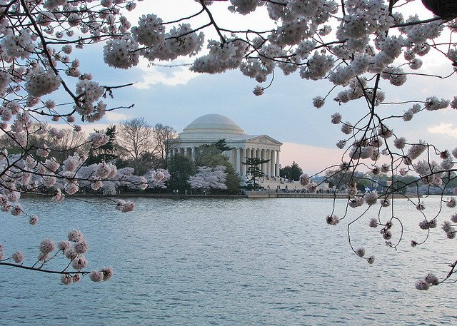 National Cherry Blossom Festival a Washington