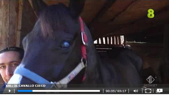 Lagat, il cavallo cieco che corre e vince :)