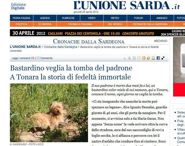 Bastardino che a Laconi in Sardegna va ogni giorno a trovare il suo padrone!
