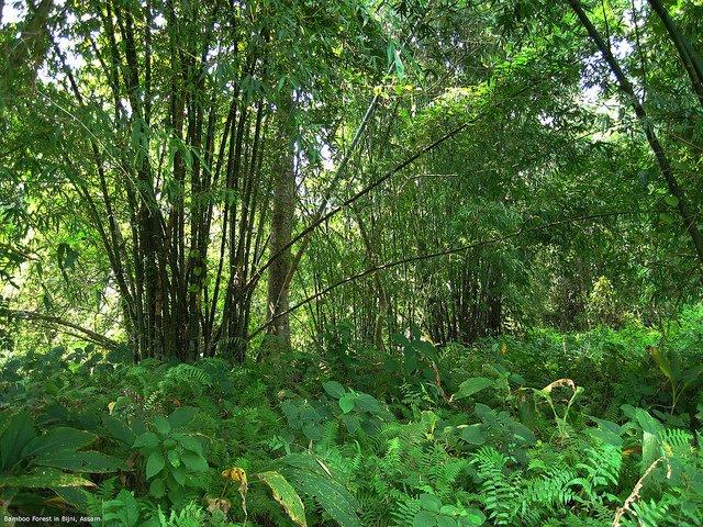 La Foresta Molai, dove un ragazzo in 30 anni di duro lavoro ha piantato a mano 550 ettari di foresta