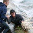Salva agnellino dal mare norvegese freddo e agitato
