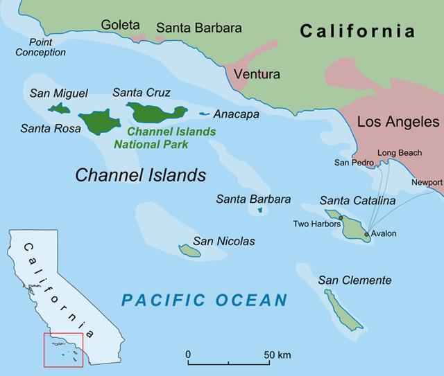 channel-island-fox-volpe-dove-siamo