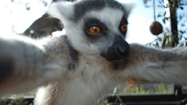 Bekily-Selfie-Zoo-Londra