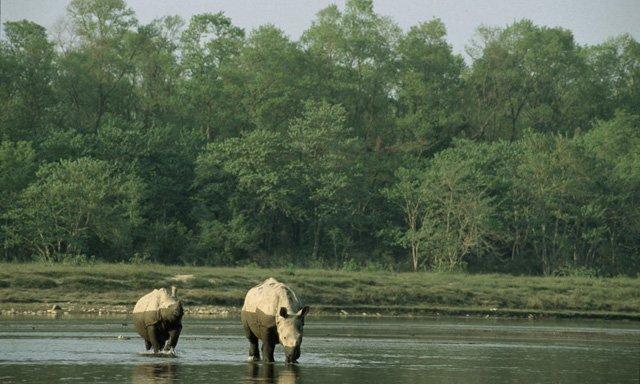 rinoceronti-in-nepal