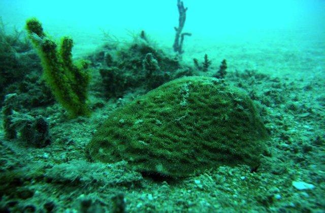 barriera-corallina-iraq
