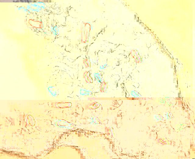 impronte-800-mila-anni-fa-inghilterra