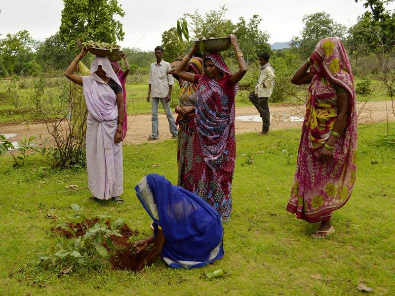 donne-piantano-alberi-in-india