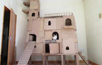 drago-cartone-gatto
