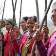 india-record-alberi-piantati
