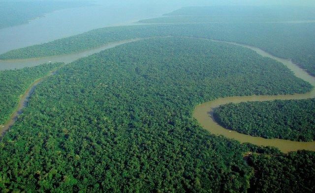 Agricoltura nell' Amazzonia? Nei campi sopra elevati!