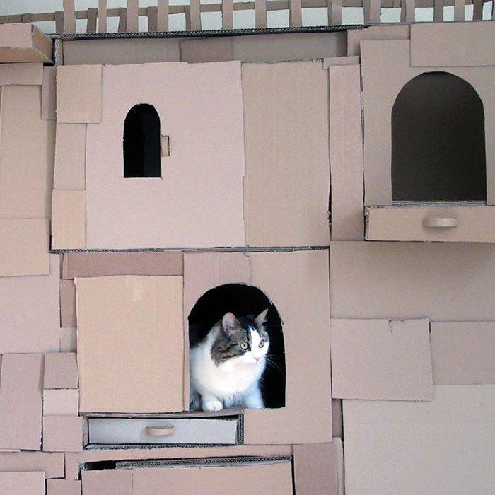 castello-cartone-gatto